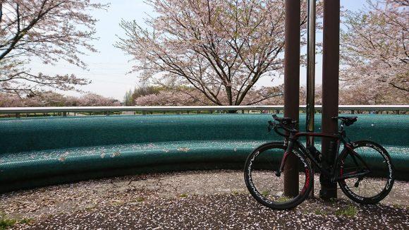 (selle ITALIA) SLR Friction Free Flow(セラ・イタリア フリクション フリー フロー)サドルを装着したロードバイク「ピナレロ ボーラワン50 クリンチャー」