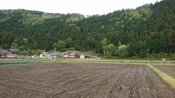 長良川鉄道沿線の田園風景